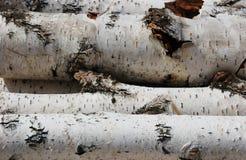 κούτσουρα σημύδων Στοκ εικόνα με δικαίωμα ελεύθερης χρήσης