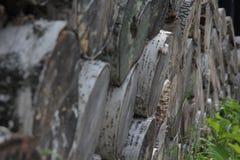 Κούτσουρα σημύδων Στοκ Φωτογραφίες