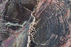Κούτσουρο αγριόπευκων περικοπών πριονιών Στοκ Φωτογραφίες