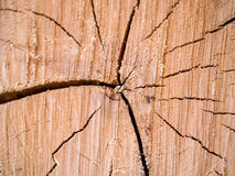 κούτσουρο αποκοπών Στοκ Φωτογραφία