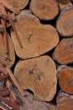 κούτσουρο δύο καρδιών Στοκ εικόνα με δικαίωμα ελεύθερης χρήσης