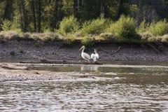 κούτσουρο πουλιών Στοκ φωτογραφία με δικαίωμα ελεύθερης χρήσης