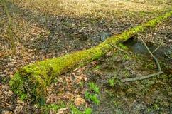 Κούτσουρο που βρίσκεται πέρα από το ρυάκι στο δάσος στοκ εικόνες