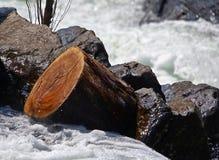 Κούτσουρο που κολλιέται Στοκ Εικόνα