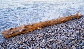 Κούτσουρο που πλένεται στην ξηρά Στοκ Εικόνα
