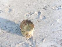 κούτσουρο στοκ εικόνα με δικαίωμα ελεύθερης χρήσης