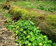 κούτσουρο mossy Στοκ Εικόνες