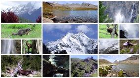 Κολάζ Άλπεων Υψηλά βουνά, χλωρίδα, πανίδα και άνθρωποι απόθεμα βίντεο