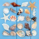 Κολάζ θαλασσινών κοχυλιών Στοκ Εικόνες