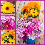Κολάζ θερινών λουλουδιών Στοκ Εικόνα
