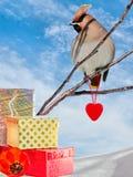 Κολάζ με τη waxwing, κόκκινα καρδιά και το κιβώτιο δώρων Στοκ Εικόνες