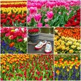 Κολάζ λουλουδιών - τουλίπες και ολλανδικά παπούτσια στο πάρκο Keukenhof, Holla στοκ φωτογραφίες