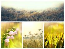 Κολάζ λουλουδιών Στοκ Εικόνα