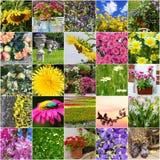 Κολάζ της διαφορετικής άνθισης λουλουδιών Στοκ φωτογραφία με δικαίωμα ελεύθερης χρήσης