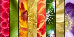Κολάζ των λουλουδιών στα λωρίδες Στοκ Φωτογραφίες