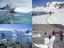 Κολάζ των δραστηριοτήτων κρουαζιέρας της Ανταρκτικής Στοκ Εικόνα