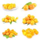 Κολάζ των cumquats Στοκ εικόνα με δικαίωμα ελεύθερης χρήσης