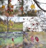 Κολάζ φύσης φθινοπώρου Στοκ Εικόνα