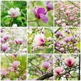 Κολάζ Magnolia στοκ εικόνες