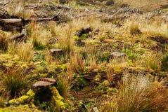 Κολοβώματα δέντρων Στοκ φωτογραφίες με δικαίωμα ελεύθερης χρήσης