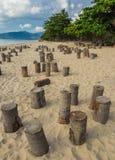 Κολοβώματα καρύδων στην παραλία που προετοιμάζεται για το κόμμα νύχτας, Samui, Thailan Στοκ εικόνα με δικαίωμα ελεύθερης χρήσης