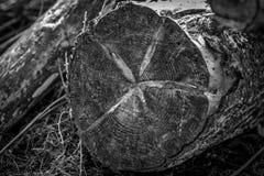 κολοβώματα Στοκ εικόνες με δικαίωμα ελεύθερης χρήσης