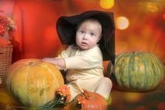 κολοκύθα μωρών Στοκ Φωτογραφίες