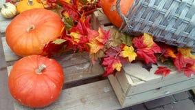 Κολοκύθες και ζωηρόχρωμα φύλλα Στοκ εικόνα με δικαίωμα ελεύθερης χρήσης