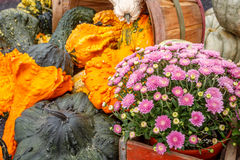 Κολοκύθες και λουλούδι Στοκ εικόνα με δικαίωμα ελεύθερης χρήσης