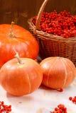 Κολοκύθες και rowan-berry Στοκ εικόνα με δικαίωμα ελεύθερης χρήσης
