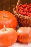 Κολοκύθες και rowan-berry Στοκ Φωτογραφίες