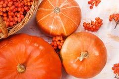 Κολοκύθες και rowan-berry Στοκ Εικόνα