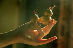 Κολοκύθες μπουκαλιών εκμετάλλευσης χεριών Στοκ φωτογραφία με δικαίωμα ελεύθερης χρήσης