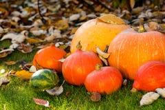 Κολοκύθες στη χλόη με τα φύλλα Στοκ Φωτογραφία