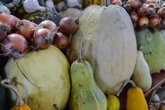 Κολοκύθες των διαφορετικών ποικιλιών των κρεμμυδιών στην αγορά Στοκ φωτογραφία με δικαίωμα ελεύθερης χρήσης