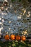 Κολοκύνθη και κολοκύθες κολοκυθών Στοκ Φωτογραφία