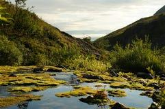 Κολπίσκος βουνών με το βρύο στοκ εικόνα με δικαίωμα ελεύθερης χρήσης
