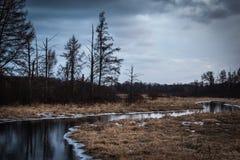 Κολπίσκος κέδρων Στοκ φωτογραφία με δικαίωμα ελεύθερης χρήσης