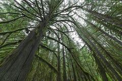 Κολπίσκος καταρρακτών Pacific Northwest τροπικών δασών Στοκ Φωτογραφία