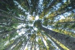 Κολπίσκος καταρρακτών Pacific Northwest τροπικών δασών Στοκ εικόνες με δικαίωμα ελεύθερης χρήσης