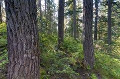 Κολπίσκος καταρρακτών Pacific Northwest τροπικών δασών Στοκ Εικόνες