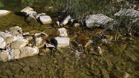 Κολπίσκος με το σαφές τρεχούμενο νερό φιλμ μικρού μήκους