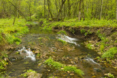 Κολπίσκος στα δάση Στοκ εικόνα με δικαίωμα ελεύθερης χρήσης
