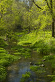 Κολπίσκος στα δάση Στοκ Εικόνες