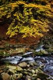 Κολπίσκος στο δάσος βουνών φθινοπώρου Στοκ Φωτογραφία