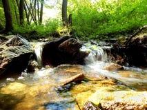 Κολπίσκος στο αποβαλλόμενο δάσος Στοκ εικόνες με δικαίωμα ελεύθερης χρήσης