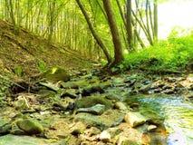 Κολπίσκος στο αποβαλλόμενο δάσος Στοκ φωτογραφίες με δικαίωμα ελεύθερης χρήσης