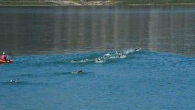 Κολυμβητές που κολυμπούν σε ένα triathlon σε ένα έλος απόθεμα βίντεο