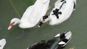 Κολυμπήστε από κοινού Στοκ φωτογραφίες με δικαίωμα ελεύθερης χρήσης
