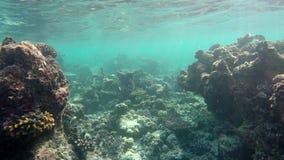 Κολυμπήστε μέσω ενός σκοπέλου φιλμ μικρού μήκους